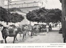 BRESIL Une Rue De Pernambuco   Document Original Américain De 1931 - Non Classificati