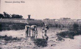 Chine, Chinese Planting Rice (206) - China