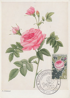 Carte   Maximum   1er   Jour   FRANCE   Roses  De  France  VERTOLAYE   1962 - Cartes-Maximum
