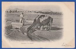Algerie ? Chameaux A La Seguia 1903 ( Très Très Bon ETAT ) WW2051 - Scenes