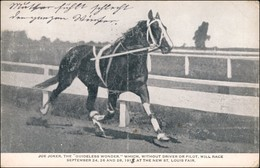 Postcard St. Louis St. Louis Fair - Rennpferd Horse Joe Joker 1912 - United States