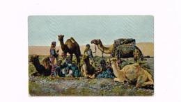 Caravane Au Repos. - Egypt