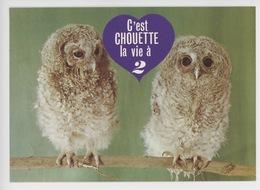 C'est Chouette La Vie à Deux... Bébé Hulotte - Animaux Humoristiques Cp Vierge N°0310 - Humour