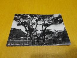 CARTOLINA LA BELLA PINETA-S.MENARIO-VIAGG.1960-VERA FOTOGRAFIA - Foggia