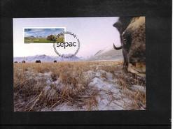 Greenland / Groenland 2013 Musk Oxen Interesting Maximumcard - Briefmarken