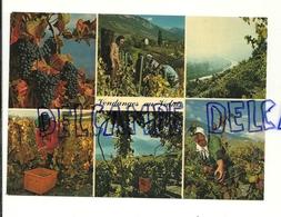Vignes. Vendanges Au Valais. Mosaïque. Editions - Jubin - Vignes