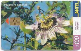 Uruguay - Antel - Passiflora Coerulea Flower - TC 171a - 03.2001, 50.000ex, Used - Uruguay
