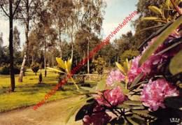 Het Arboretum - Provinciaal Domein Bokrijk - Genk - Genk