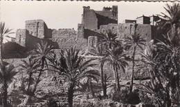 CPSM Sud Marocain - Kasbah Et Palmeraie (43088) - Sonstige