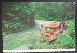 JAMAICA - Picnic Party In The Lush And Verdant Fern Gully Near Ocho Rios  - Vg - Giamaica