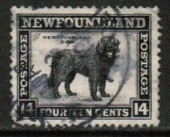 NEWFOUNDLAND  Scott # 261 VF USED  (Stamp Scan # 528) - Terre-Neuve