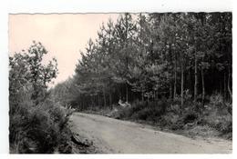 HERSELT , Oude Heirbaan Met Kipdorpse Bossen - Herselt