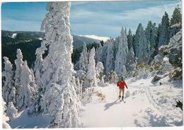Ski De Fond - (Abriès, 1977) - Hautes Alpes - Briancon