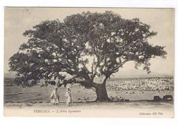 FERNANA  L ARBRE LEGENDAIRE - Tunesien