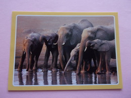 PANINI ANIMAL WORLD Animaux N°451  éléphant Elefant Elefante Elephant - Panini