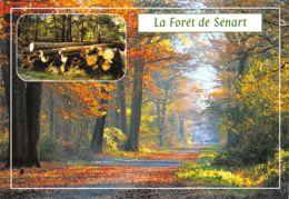45-LA FORET DE SENART-N°C-3481-D/0131 - Frankreich