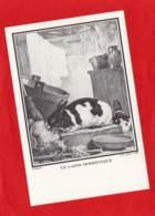 * * LE LAPIN DOMESTIQUE * * Par BUFFON ( 1707-1788 ) - Contemporanea (a Partire Dal 1950)