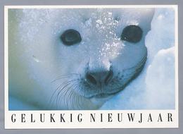 NL.- Jonge Zeehond Of Rob. Gelukkig Nieuwjaar. - Andere
