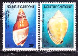 Nuova Caledonia  Conchiglie   Usati - Neukaledonien