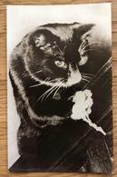 Vintage Postcard Cat ~1965, Stichting 'Kat In Nood' Den Haag Van Speykstraat - Real Photo, Unused - Katten