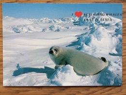 Seal Zeehond Rob Seehund Robbe Phoque Foca, Unused - Andere
