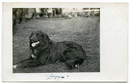 DOG : DORA / POSTMARK - EAST BERGHOLT / ADDRESS - COLCHESTER, ABBEYGATE - Dogs