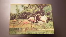 BIRD - Flamingo  - STEREO 3D PC - Stereoscope Cards