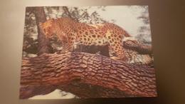 Jaguar - STEREO 3D PC - Stereoscope Cards