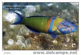 CROATIA 2006 - Croatie - Undersea - Marine Life - Fish - Fisch – Poisson - Fishes - Pez - Pesci - Poissons - T. PA - Croatie