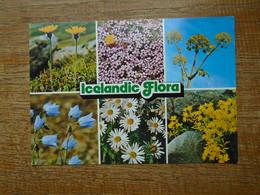 Islande , Icelandic Flora - Islande