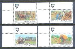 D186- Venda 1986. South Africa. Farming Horses. Afrique Du Sud Afrika RSA Sudafrika. - Venda
