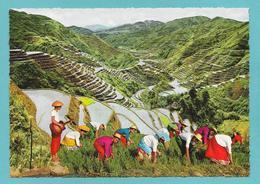 PHILIPPINES THE EIGHTH WONDER OF THE WORLD - Filippine