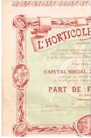 Titre Ancien - L'Horticole Coloniale - Société Anonyme - Titre De 1899 - Déco - Afrique