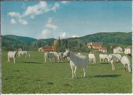 PIBER  - Bundesgestüt, Pferde, Horse, Cheval    1970 - 1980 - Autres