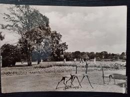Berlin-Treptow, Im Treptower Park, DDR, 1965 - Treptow