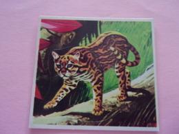 PANINI SUPER ZOO N°231 Ocellotto Ocelot Amerikaanse Kat Pantherai - Panini