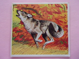 PANINI SUPER ZOO N°158 Lupo Loup Wolf - Panini