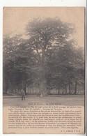 91 - Forêt De Sénart - Le Chêne D'antin - La Légende - Sénart