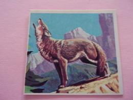 PANINI SUPER ZOO N°211 Coyote  Koyote - Panini