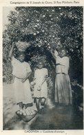 940.  CACONDA. Cueillette D'Oranges - Angola