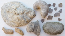 LOT : GRYPHAEA ARCUATA DU Sinémurien, HUITRE FOSSILE + ŒUFS DINOSAURES + AUTRES à Déterminer - Fossiles