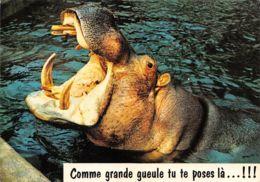 TH-HIPPOPOTAMES-N°C-3569-A/0223 - Hippopotames