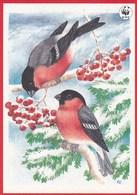 Birds - Bullfinches - WWF Panda Logo - Priit Rea - Special Stamped - Arctic Circle Napapiiri Suomi Finland - Oiseaux
