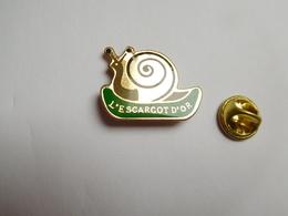 Beau Pin's  , L' Escargot D'Or , Snail - Animaux