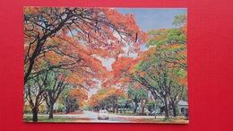 Auto.Salisbury.Flamboyant Trees,Blakiston Street.Rhodesia - Simbabwe