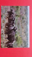 Postcard+stamp=Buffalo.Rhodesia - Simbabwe