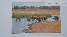 D167161 ZIMBABWE  -Wankie National  Game Park  -Elephants - Simbabwe