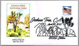 JOSHUA TREE NATIONAL PARK - CACTUS. Joshua Tree CA 2019 - Cactus