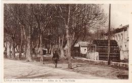 L' ISLE SUR SORGUE - Allées De La Ville Vieille (1297 ASO) - L'Isle Sur Sorgue