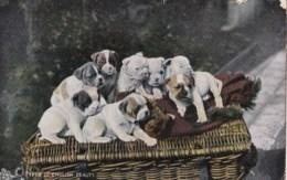AM45 Animals - Dogs, Types Of English Beauty - Raphael Tuck Animal Studies - Dogs